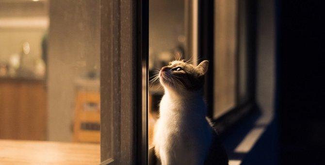 猫に「死」の概念はあるのか?
