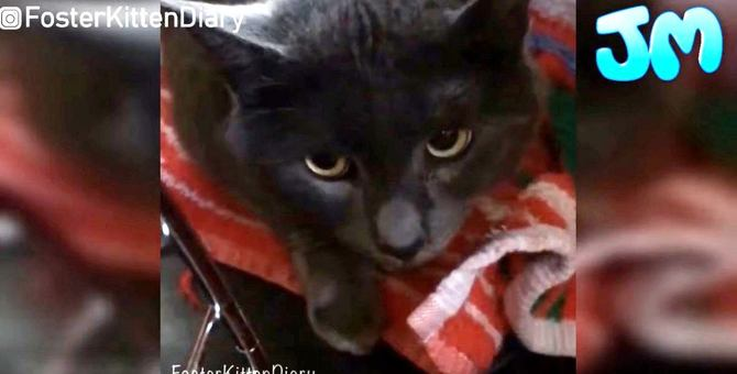 「うつ」でずっと里親が見つからなかった猫に「愛情」で奇跡が…!