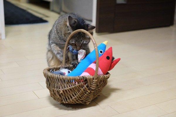 猫用の知育玩具のススメ!使うメリット4つ