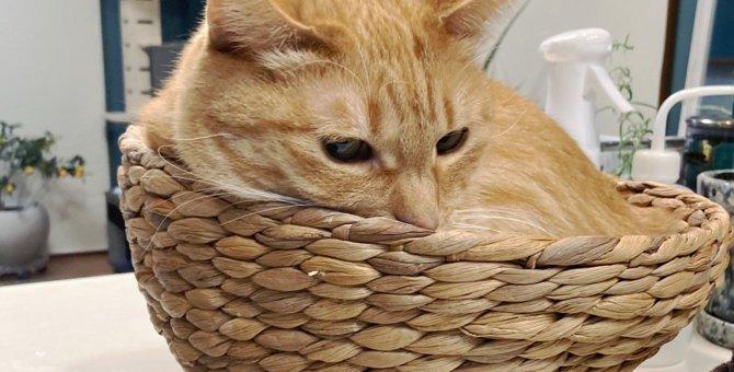 これぞ猫足の最高峰!カゴから足が生えた猫に7万人が称賛!