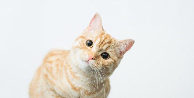 猫が『覚えやすい名前』ランキングTOP3