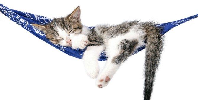 窓に貼る猫ベッド 今人気のオススメ商品とは!