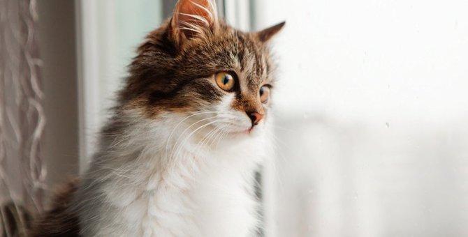 猫の致死率ほぼ100%の『猫伝染性腹膜炎(FIP)』とは?原因や症状などを徹底解説