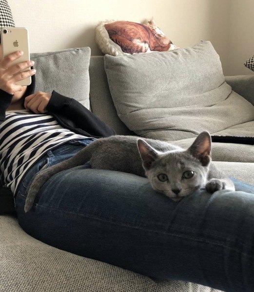 猫が『家族』と認めた人にだけする仕草や行動5つ