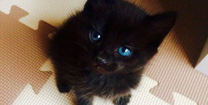 多頭飼育崩壊から我が家へきた黒猫