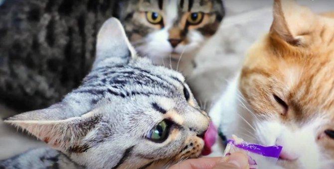 おやつは譲れない!同時に食べちゃう猫ちゃんたち