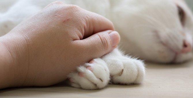 猫に『元気』を出してもらう方法3選!落ち込んでいる猫を励ますコツとは?