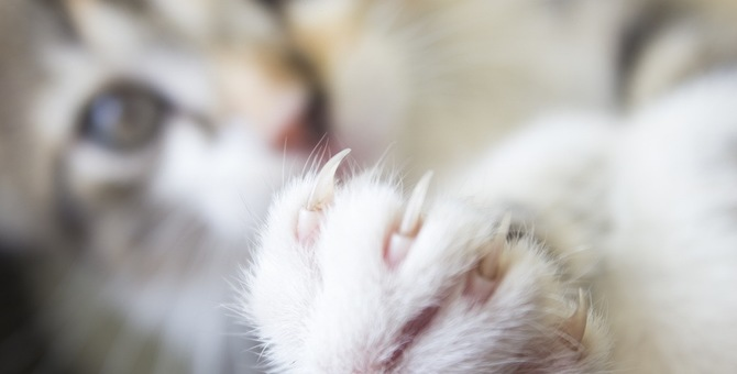 猫の爪が巻き爪に…!切る時はどうすればいい?