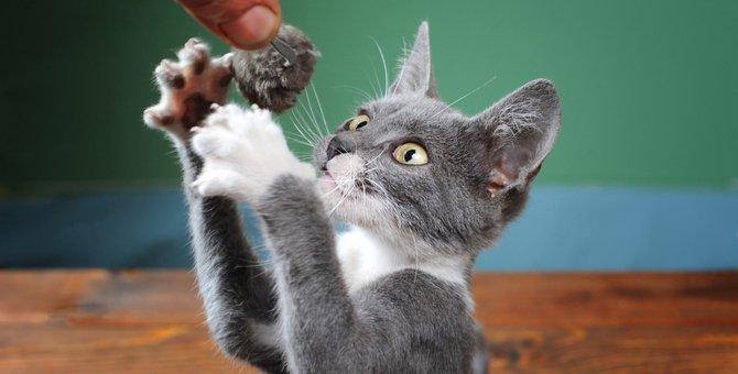 猫との遊び方!コツや夢中になる方法、おすすめグッズ