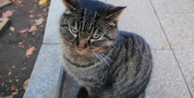 猫が嫌悪感を持っている『5つのモノ』