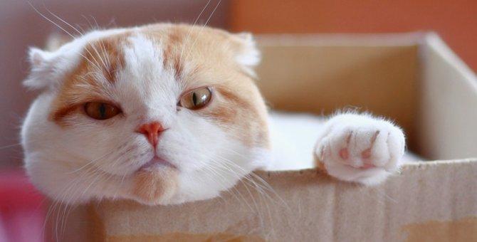 猫がわがままな理由としつけ方