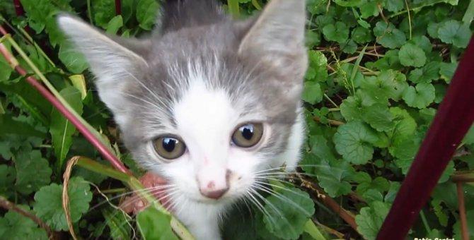 野良の子猫が警戒心を解くまで