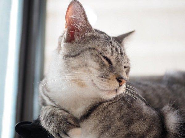 猫を幸せにする飼い方5つ