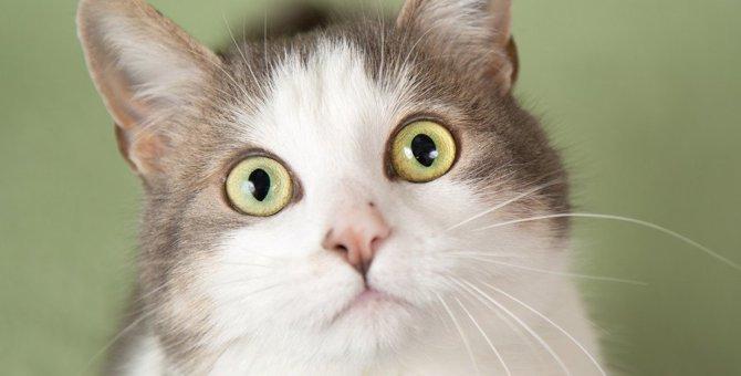 猫はキュウリが天敵!?どうして驚いてしまうの?