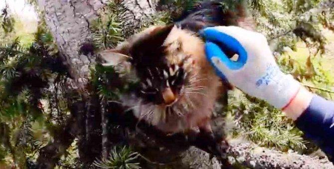 木の上に4日間も放置された猫……危険な救出作業の結末は?
