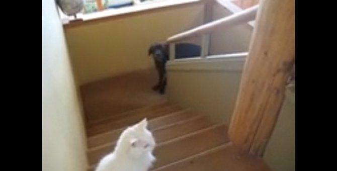 階段のてっぺんで絶対的な権力を持つ猫さん
