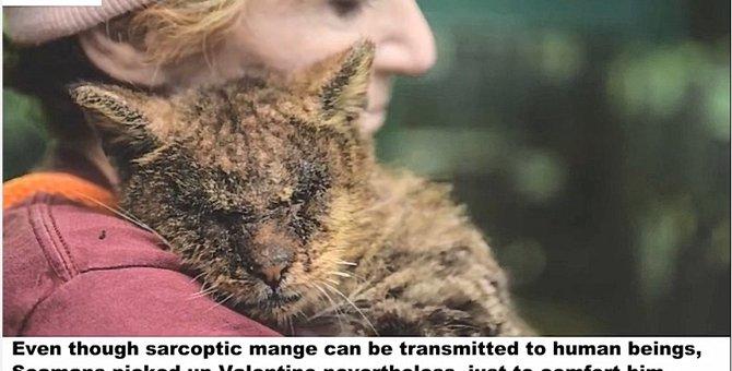 酷い状態で通りから保護されシェルターに収容された猫
