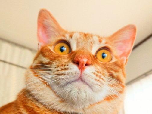 猫が『体内時計』で認知していること5つ