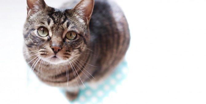 猫が飼い主を『慰めている時』にする仕草や行動4選
