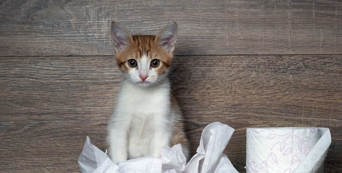 愛猫の血便 原因となる病気と対処法