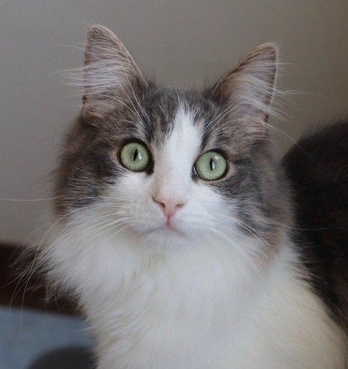 猫は自分や家族の『名前』を理解してる?