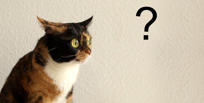 猫が心を奪われる『謎アイテム』3選