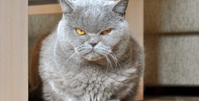 猫がヤキモチを妬くシチュエーション3つ