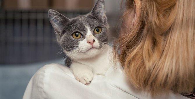 迷子の猫の探し方や予防、対策について