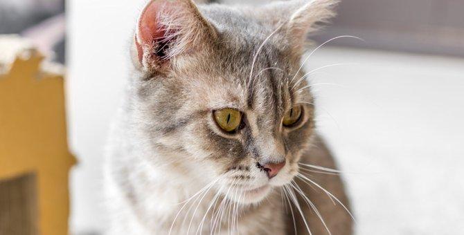 猫がゲロを吐いた!危険な症状とは