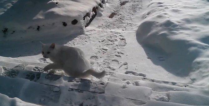 「おててがキンキンだニャ…」初めて雪をみた猫ちゃん、感想は?