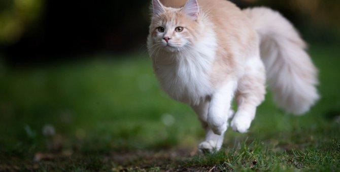 猫が突然全力疾走する理由と心理4つ