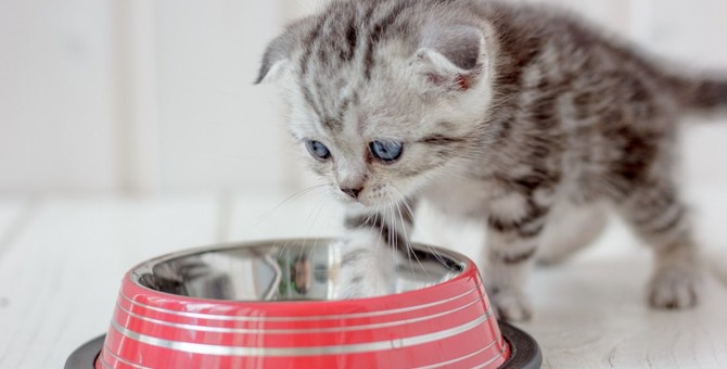 猫がごはんに「砂かけ」するのはマズイから?