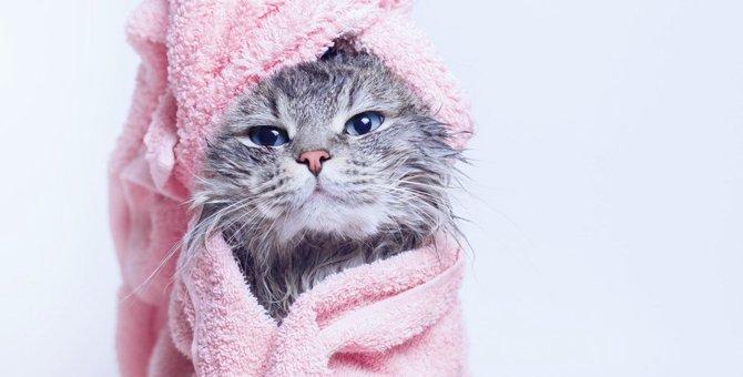 猫がいるお家の『湿気対策』5つ!ジメジメの季節に起こりやすい湿気トラブルとは?