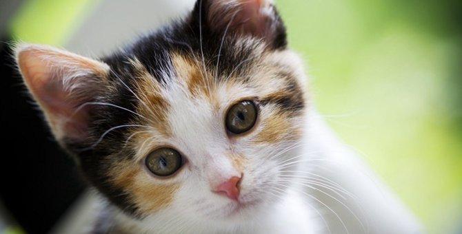 猫の目の色はこんなにカラフル!その秘密は?!