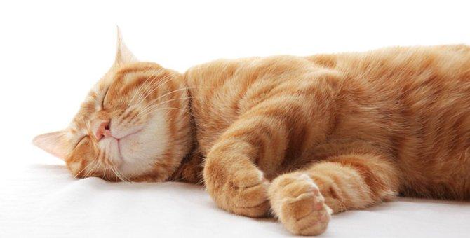 猫が軟口蓋過長症になった時の症状と治療方法
