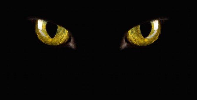 猫は人を見抜く力がある!?その見分け方とは?