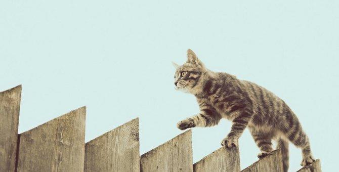 すごくない?猫のバランス感覚に関する不思議5つ