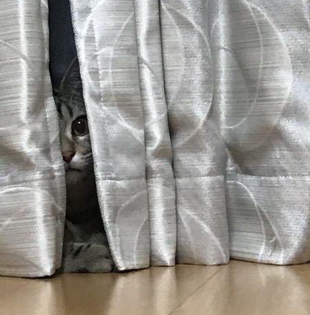 猫が物陰から覗いているときの心理3つ