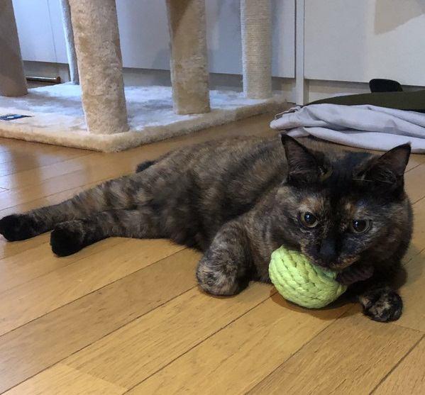 猫から『尊敬』される飼い主の特徴3つ