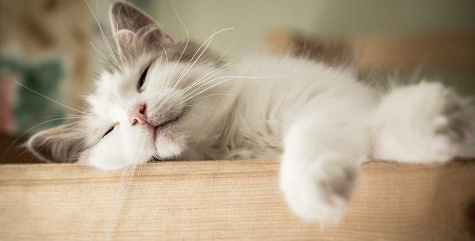 猫の寝息が可愛すぎる!注意すべきいびきと病気の前兆