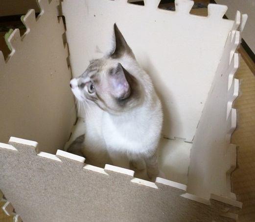簡単!ジョイントマットで作る組み立てるだけの猫ハウス