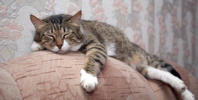 なぜくつろげる?猫の片足がずり落ちても気にしない心理