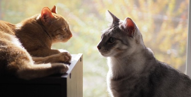 猫の『多頭飼い』に必要な環境とは?注意すべきポイント5つ