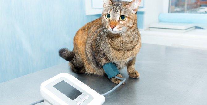 高齢猫に多発中!猫の『高血圧症』の症状と予防策3つ