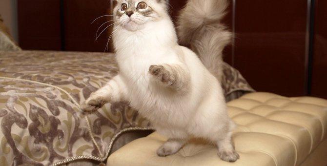 猫が「うんちハイ」になる理由4つ