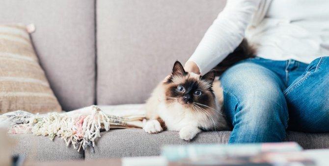 猫にも一人になりたい時はある?飼い主との程良い距離感とは?