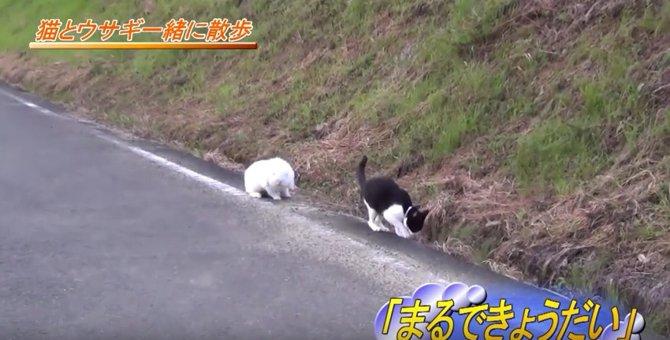 まるで姉弟みたい♪仲良くお散歩する猫さんとうさぎが微笑ましい!
