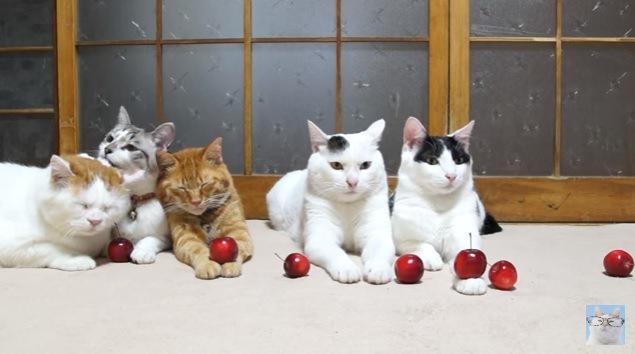 猫の手にリンゴ!とってもシュールな白と赤の共演をご覧ください☆