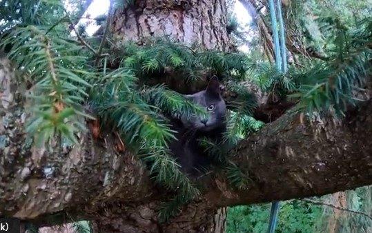 どんな時も猫の味方!Canopy cat rescueは半月ですでに5匹救助