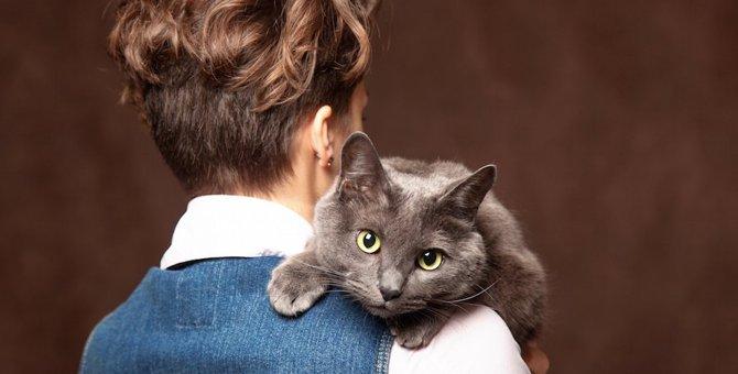 ロシアンブルーは嫉妬深い性格?嫉妬したときに見せる行動や対処法